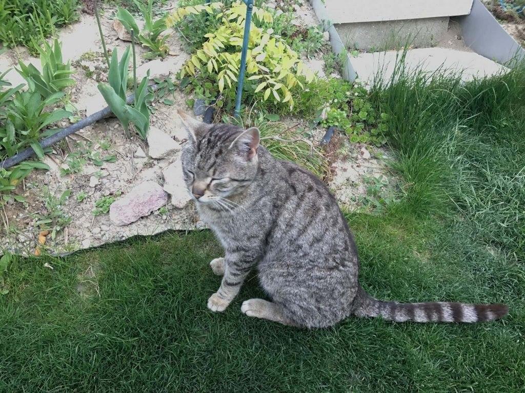 Som taký tichý, že mačička spokojne oddychuje v záhrade.